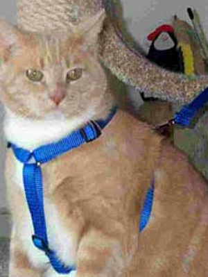 X_Large_Cat_Easy_On_Off_No_Pull_Harness
