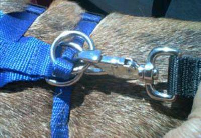 Dog Truck-SUV Safety Hook System