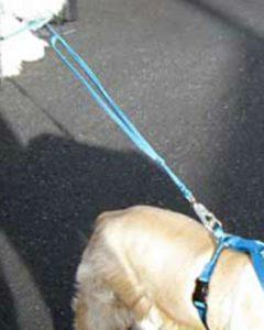 Large Dual Handle Leash - Second Handle