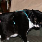 Easy On/Off No Pull Cat Harness Side View
