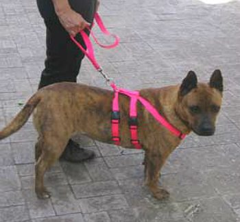 Tuff N Huff No Pull Dog Harness