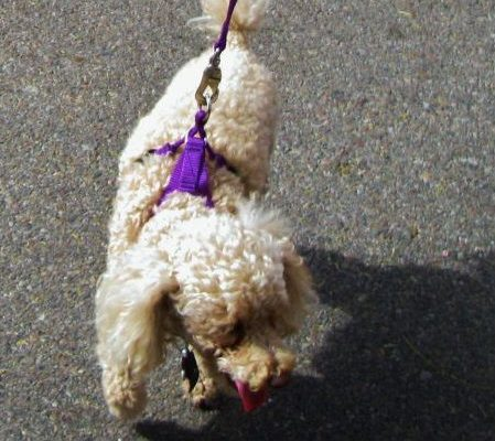 Purple Easy On/Off No Pull Harness size Small