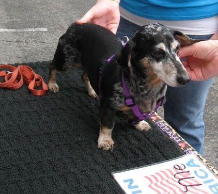 Purple Cat Medium EZ Harness for X-Small Dog