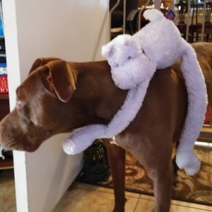 Roxie and her ride along toy.