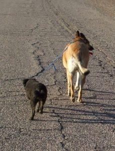 Lg Dog Leading Blind Buddy Dog