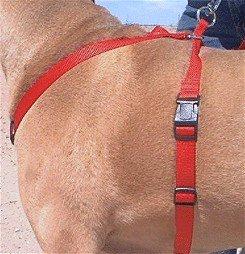 Side View of Tug N Hug Harness